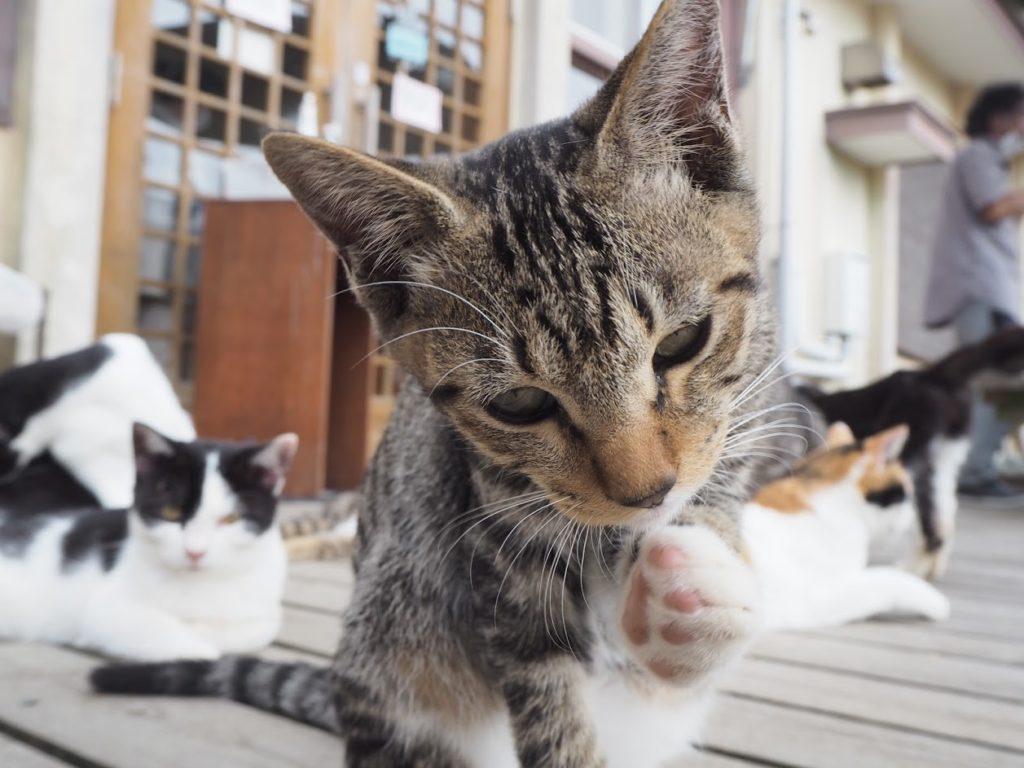 【伊勢野】猫の島