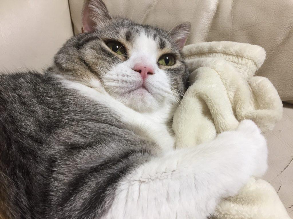 【真梨】冬の猫