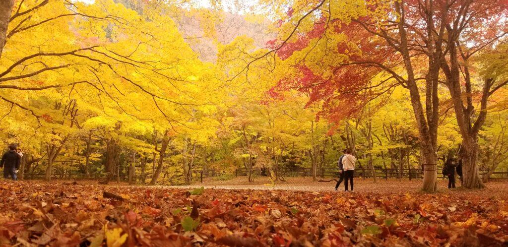 【山口】秋ですね